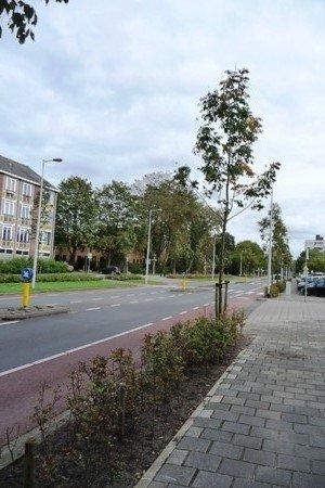 Van Boshuizenstraat 165, Amsterdam