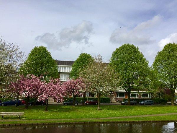 Statensingel, Rotterdam